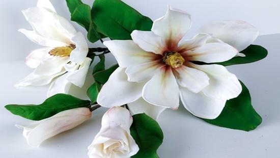 Fiore di Magnolia by Calli Hopper