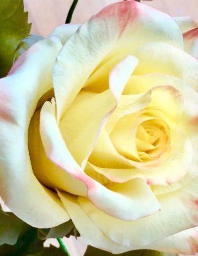 cassie-brown-saracino-flower-paste-2